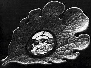 M. C. Escher, Dewdrop
